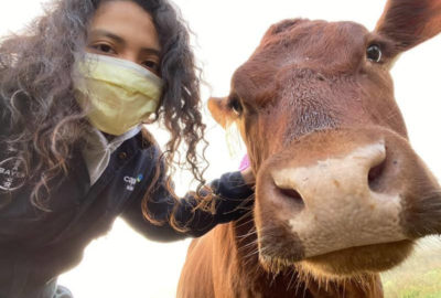 Cow Farts and Greenhouse Gases: What a Gas!